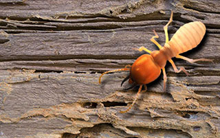 Wood Destroying Insect Inspection