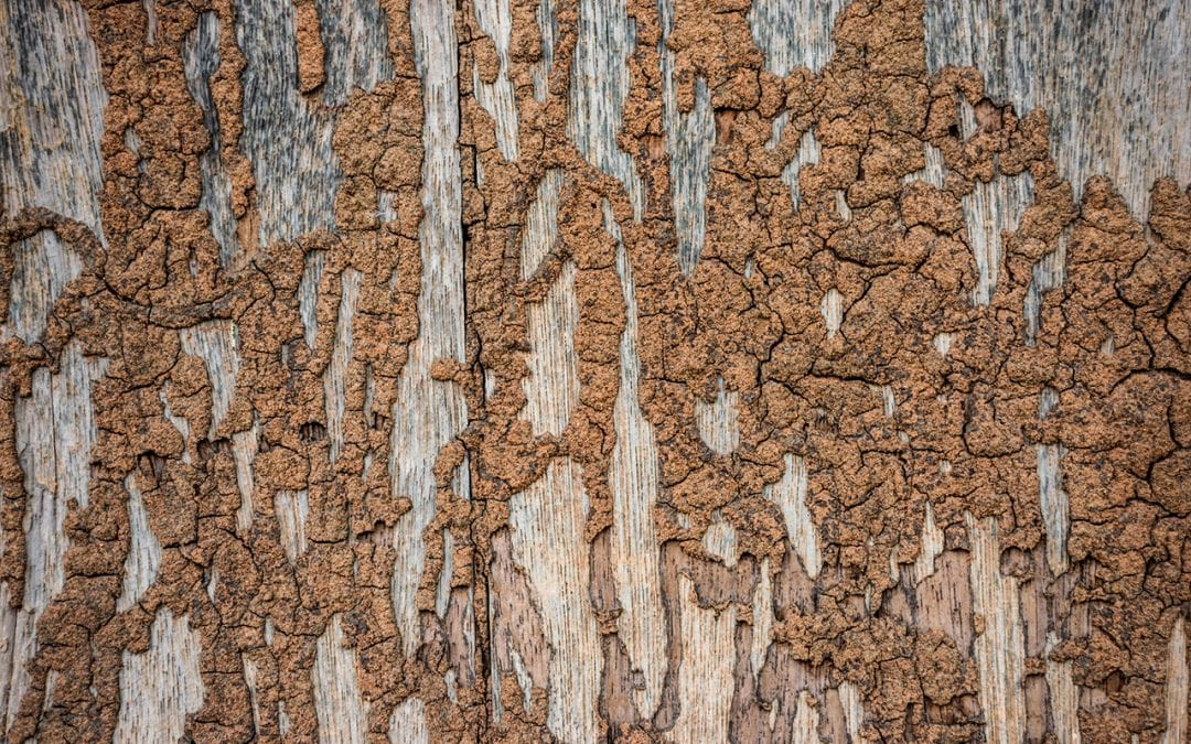 7 Signs You Have Termites in Your Home